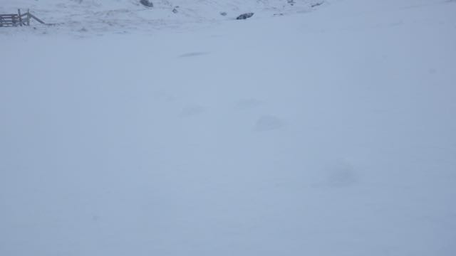 Raised footprints from a mountain hare showing erosion of snow.